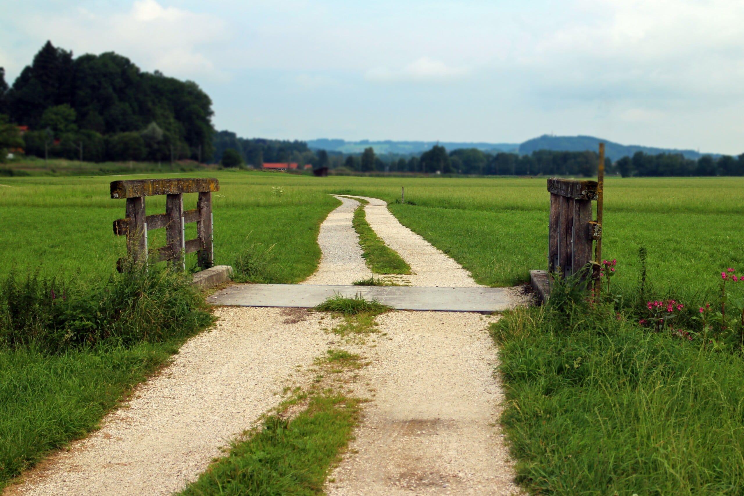 Feldweg grüner Wiese