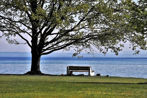 Spring Landscape Beach Lake Park