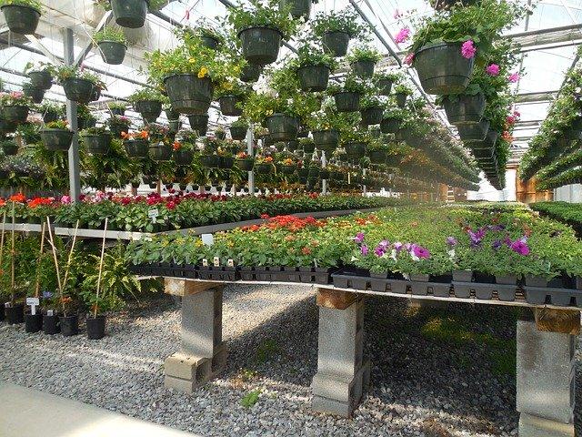 Flowers Greenhouse Garden Plant Garten Center