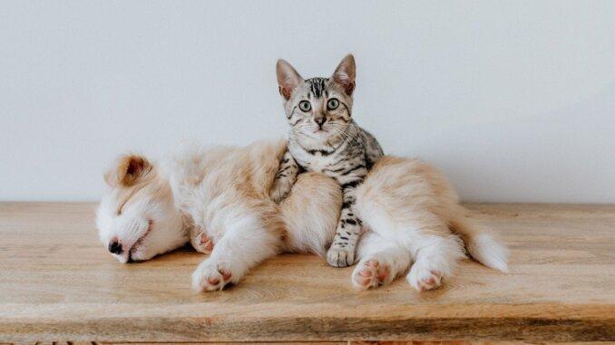 Hund und Katze Puppy Dog Pet Animal Cute - Bao_5 / Pixabay