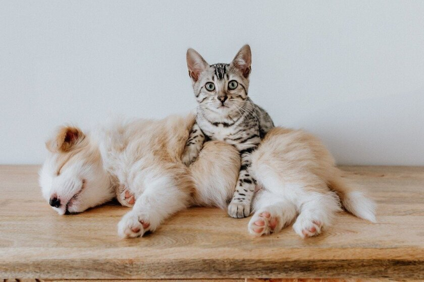 Hund und Katze Puppy Dog Pet Animal Cute - Bao_5 / Pixabay